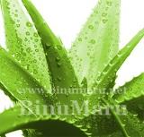 유기농 알로에베라겔(Organic Aloe Vera Gel)